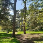 A sunny forest view in Broomhill Park